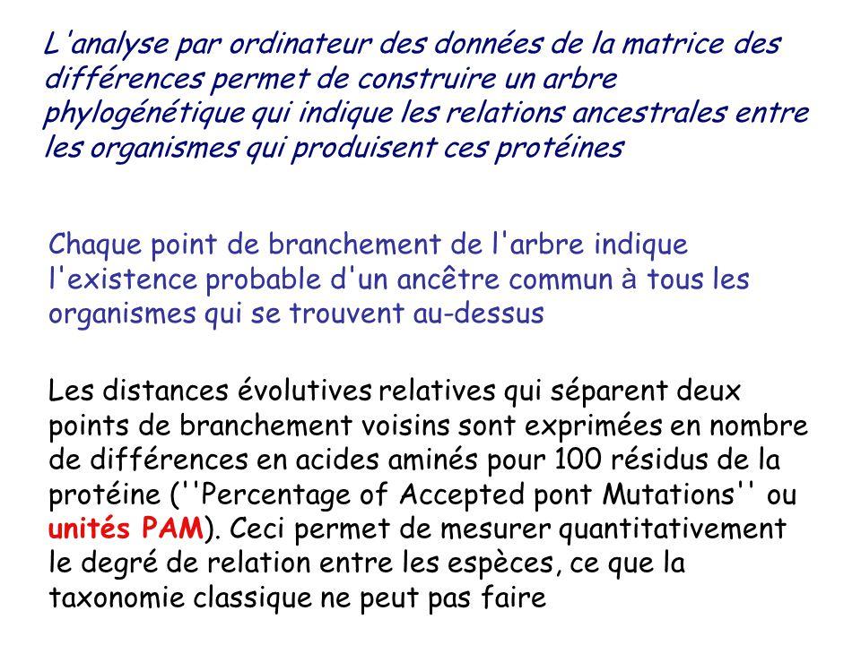 L analyse par ordinateur des données de la matrice des différences permet de construire un arbre phylogénétique qui indique les relations ancestrales entre les organismes qui produisent ces protéines Chaque point de branchement de l arbre indique l existence probable d un ancêtre commun à tous les organismes qui se trouvent au-dessus Les distances évolutives relatives qui séparent deux points de branchement voisins sont exprimées en nombre de différences en acides aminés pour 100 résidus de la protéine ( Percentage of Accepted pont Mutations ou unités PAM).