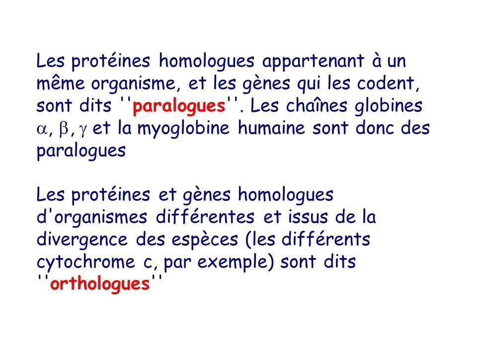 Les protéines homologues appartenant à un même organisme, et les gènes qui les codent, sont dits paralogues .