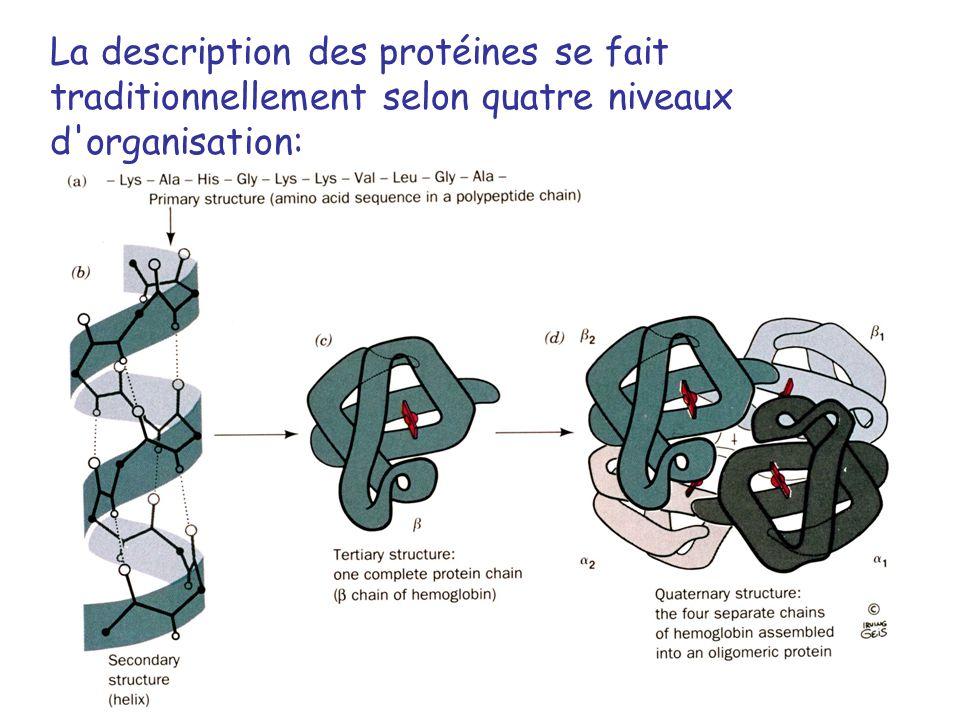 1 DETERMINATION DE LA STRUCTURE PRIMAIRE DES PROTEINES 1.Séquençage de la protéine elle-même - clivage dune protéine en peptides protéases réactifs chimiques - méthode dEdman cycles de réaction permettant lenlèvement de lacide aminé N-terminal - spectrométrie de masse 2.