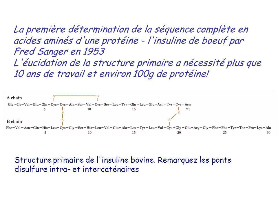 Structure primaire de l insuline bovine.