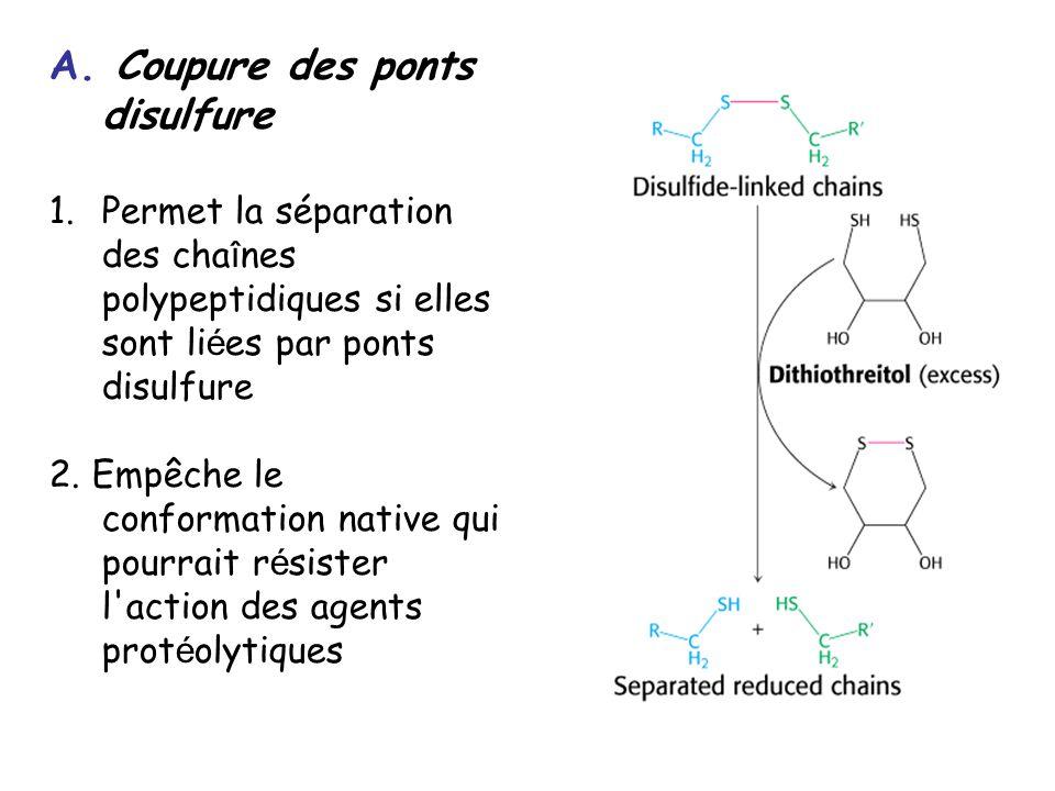 A. Coupure des ponts disulfure 1.Permet la séparation des cha î nes polypeptidiques si elles sont li é es par ponts disulfure 2. Empêche le conformati