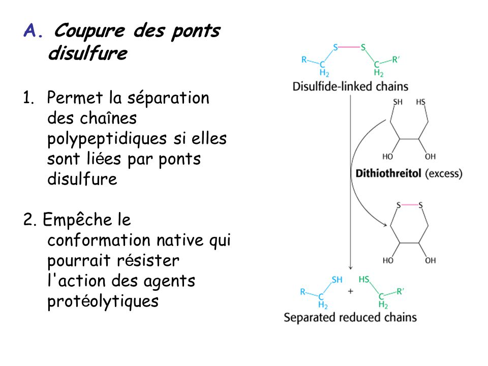 Spectre ESI-MS du cytochrome c humain M = 12360.1 Da (M+10H) 10+ (M+9H) 9+ (M+8H) 8+ (M+14H) 14+ (M+15H) 15+ (M+7H) 7+ (M+16H) 16+
