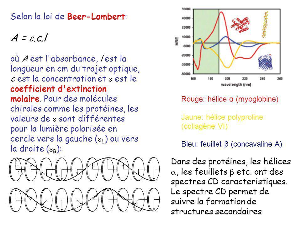 Rouge: hélice α (myoglobine) Jaune: hélice polyproline (collagène VI) Bleu: feuillet β (concavaline A) Selon la loi de Beer-Lambert: A =.c.l où A est