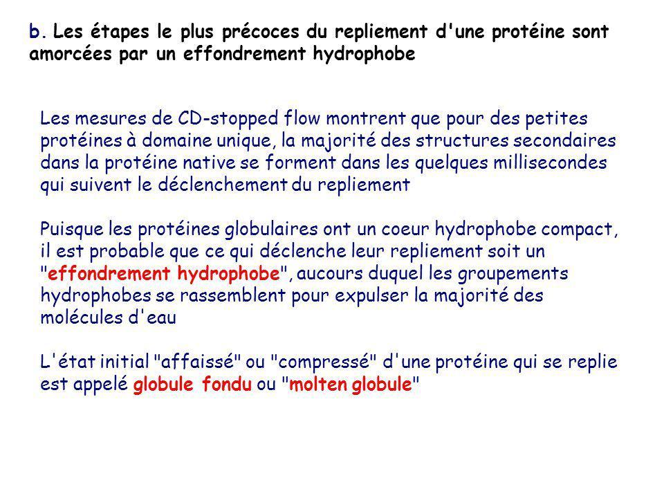 b. Les étapes le plus précoces du repliement d'une protéine sont amorcées par un effondrement hydrophobe Les mesures de CD-stopped flow montrent que p