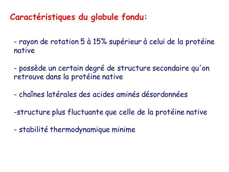 Caractéristiques du globule fondu: - rayon de rotation 5 à 15% supérieur à celui de la protéine native - possède un certain degré de structure seconda