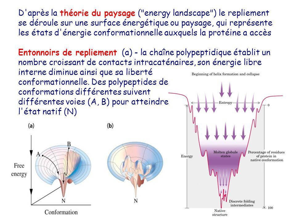 D'après la théorie du paysage (