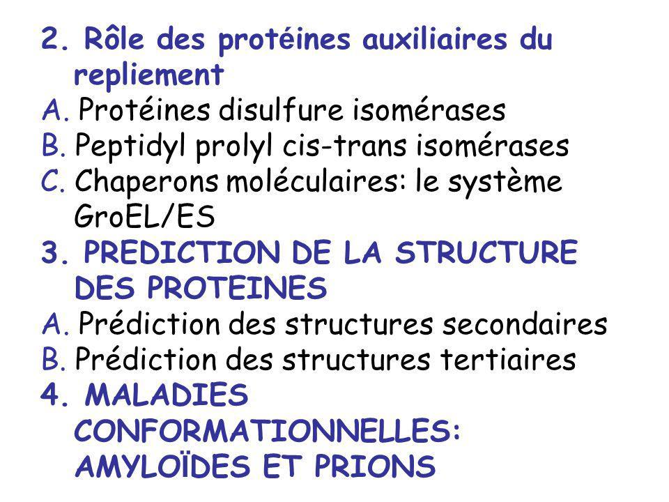 2. Rôle des prot é ines auxiliaires du repliement A. Protéines disulfure isomérases B. Peptidyl prolyl cis-trans isomérases C. Chaperons moléculaires: