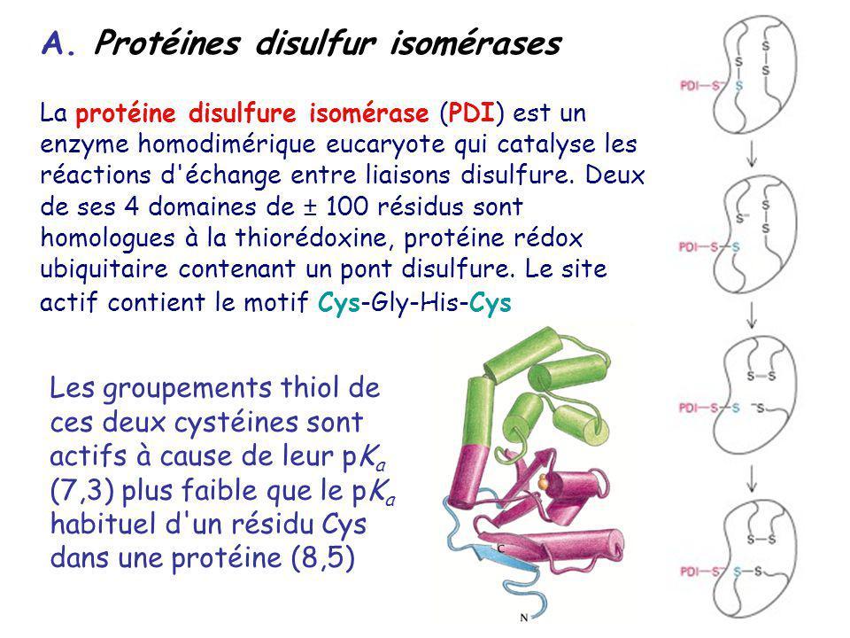 A. Protéines disulfur isomérases La protéine disulfure isomérase (PDI) est un enzyme homodimérique eucaryote qui catalyse les réactions d'échange entr