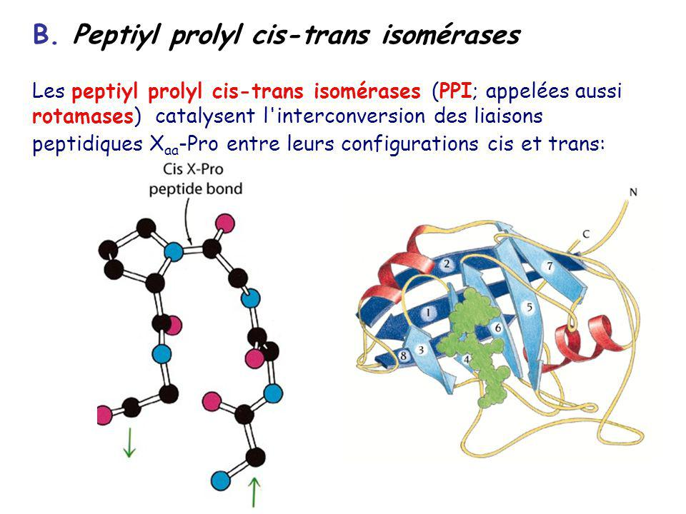 B. Peptiyl prolyl cis-trans isomérases Les peptiyl prolyl cis-trans isomérases (PPI; appelées aussi rotamases) catalysent l'interconversion des liaiso