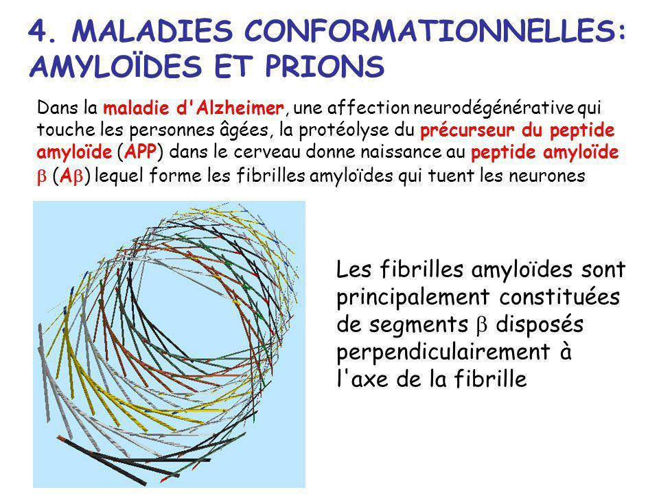 4. MALADIES CONFORMATIONNELLES: AMYLO Ï DES ET PRIONS Les fibrilles amyloïdes sont principalement constituées de segments disposés perpendiculairement