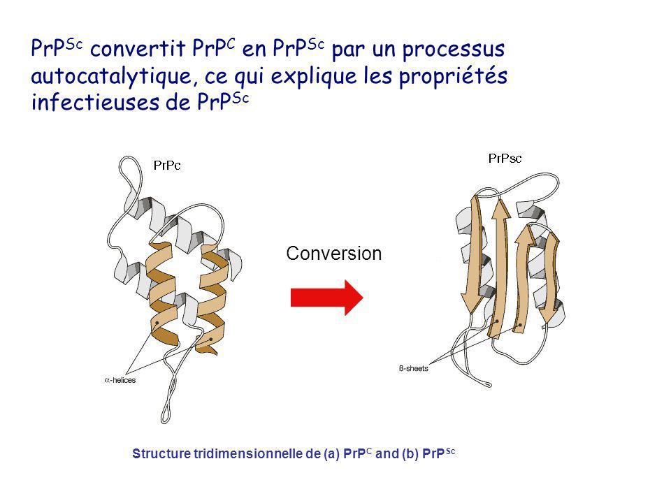 Structure tridimensionnelle de (a) PrP C and (b) PrP Sc Conversion PrP Sc convertit PrP C en PrP Sc par un processus autocatalytique, ce qui explique