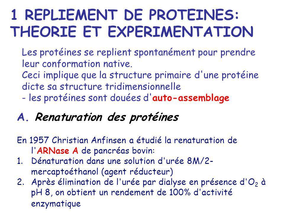 A. Renaturation des protéines En 1957 Christian Anfinsen a étudié la renaturation de l'ARNase A de pancréas bovin: 1.Dénaturation dans une solution d'