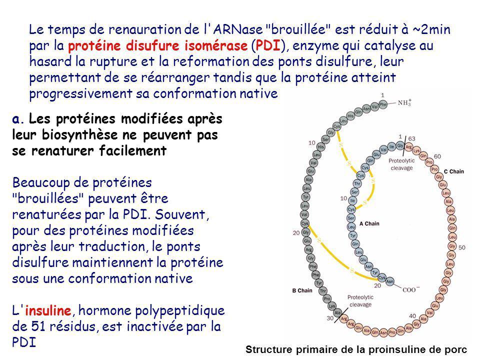 Le temps de renauration de l'ARNase