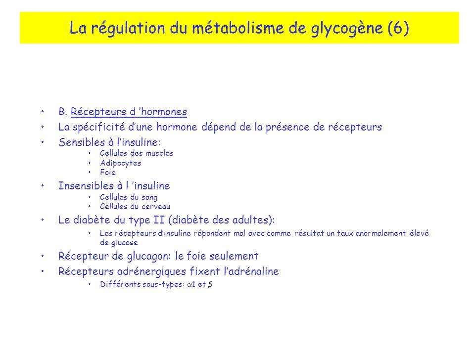 La régulation du métabolisme de glycogène (6) B. Récepteurs d hormones La spécificité dune hormone dépend de la présence de récepteurs Sensibles à lin