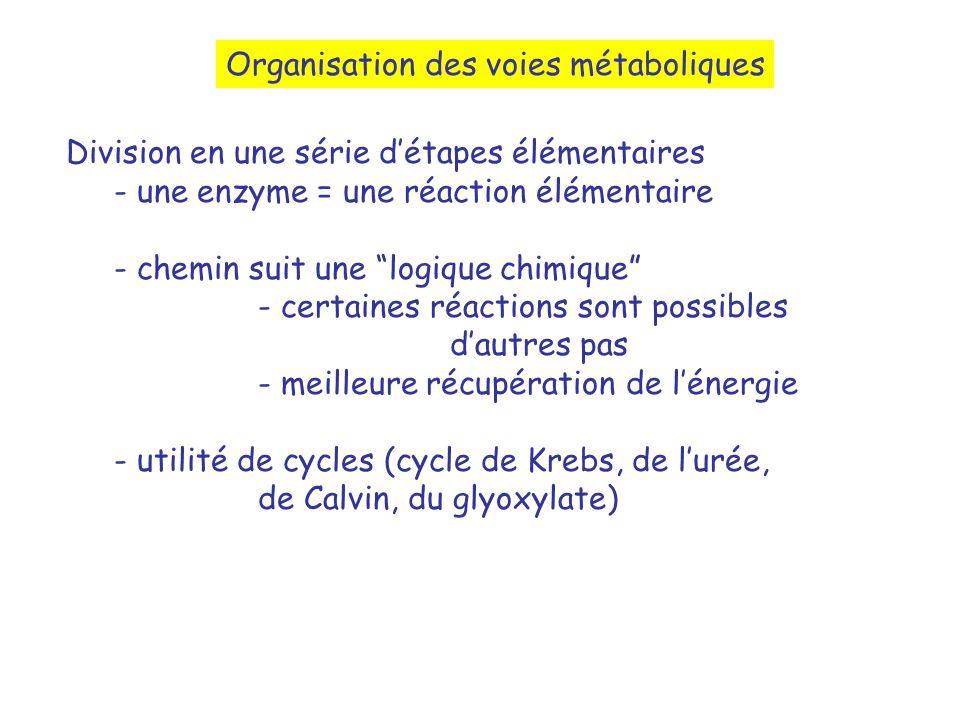 Division en une série détapes élémentaires - une enzyme = une réaction élémentaire - chemin suit une logique chimique - certaines réactions sont possibles dautres pas - meilleure récupération de lénergie - utilité de cycles (cycle de Krebs, de lurée, de Calvin, du glyoxylate) Organisation des voies métaboliques