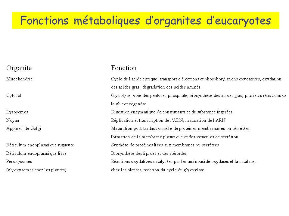 Fonctions métaboliques dorganites deucaryotes