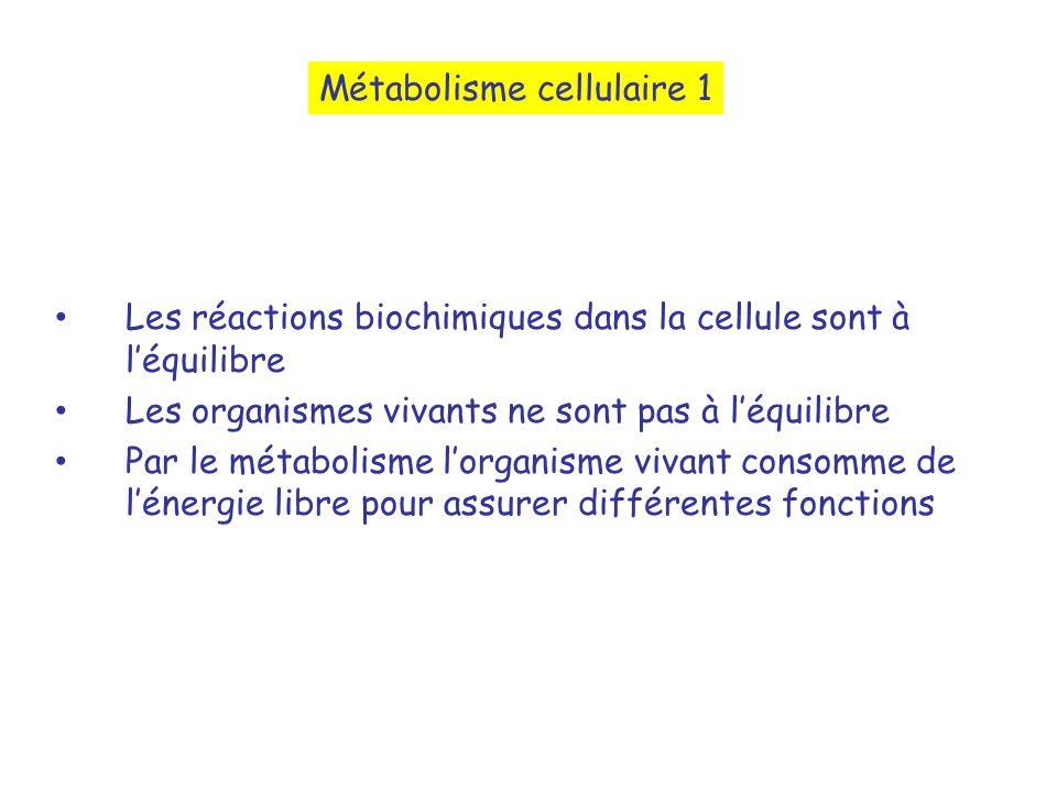 Les réactions biochimiques dans la cellule sont à léquilibre Les organismes vivants ne sont pas à léquilibre Par le métabolisme lorganisme vivant consomme de lénergie libre pour assurer différentes fonctions Métabolisme cellulaire 1