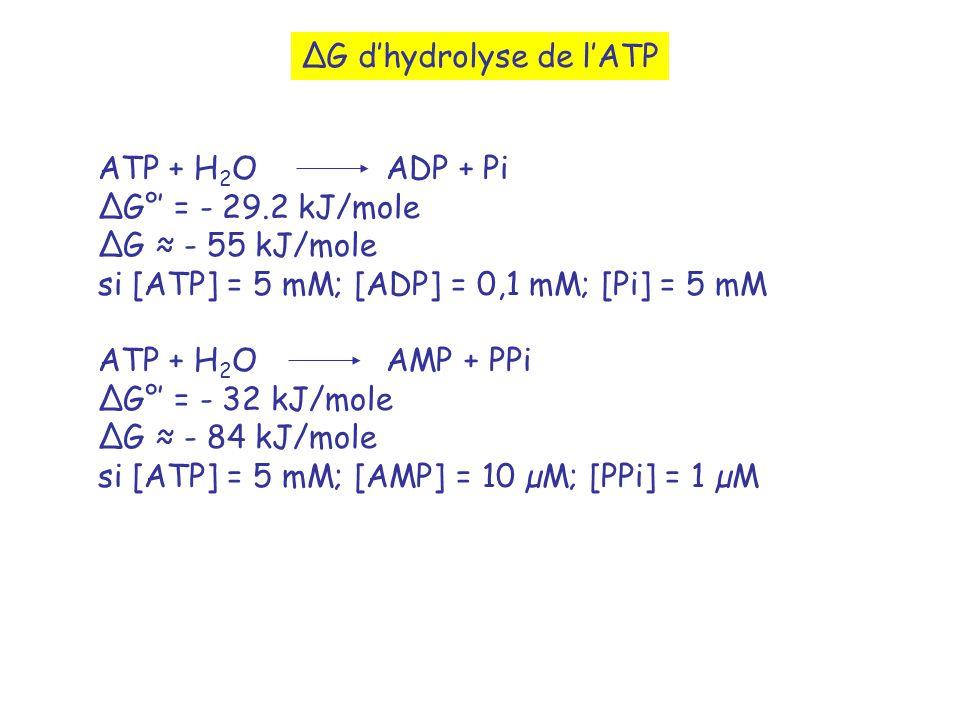 G dhydrolyse de lATP ATP + H 2 O ADP + Pi G° = - 29.2 kJ/mole G - 55 kJ/mole si [ATP] = 5 mM; [ADP] = 0,1 mM; [Pi] = 5 mM ATP + H 2 OAMP + PPi G° = - 32 kJ/mole G - 84 kJ/mole si [ATP] = 5 mM; [AMP] = 10 µM; [PPi] = 1 µM