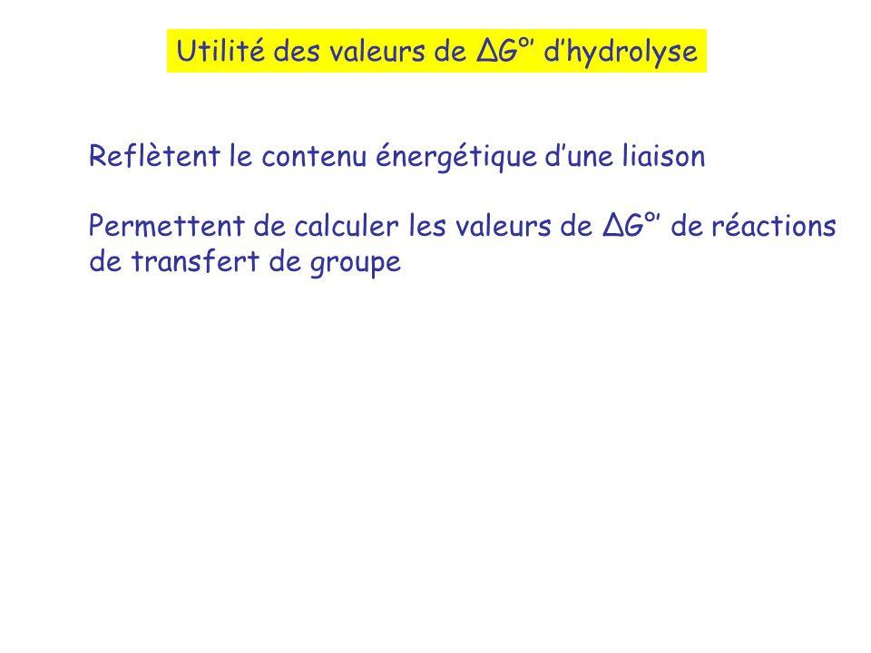 Utilité des valeurs de G° dhydrolyse Reflètent le contenu énergétique dune liaison Permettent de calculer les valeurs de G° de réactions de transfert de groupe