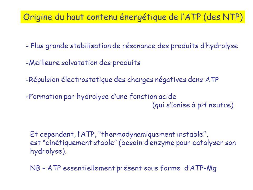 Origine du haut contenu énergétique de lATP (des NTP) - Plus grande stabilisation de résonance des produits dhydrolyse -Meilleure solvatation des produits -Répulsion électrostatique des charges négatives dans ATP -Formation par hydrolyse dune fonction acide (qui sionise à pH neutre) Et cependant, lATP, thermodynamiquement instable, est cinétiquement stable (besoin denzyme pour catalyser son hydrolyse).