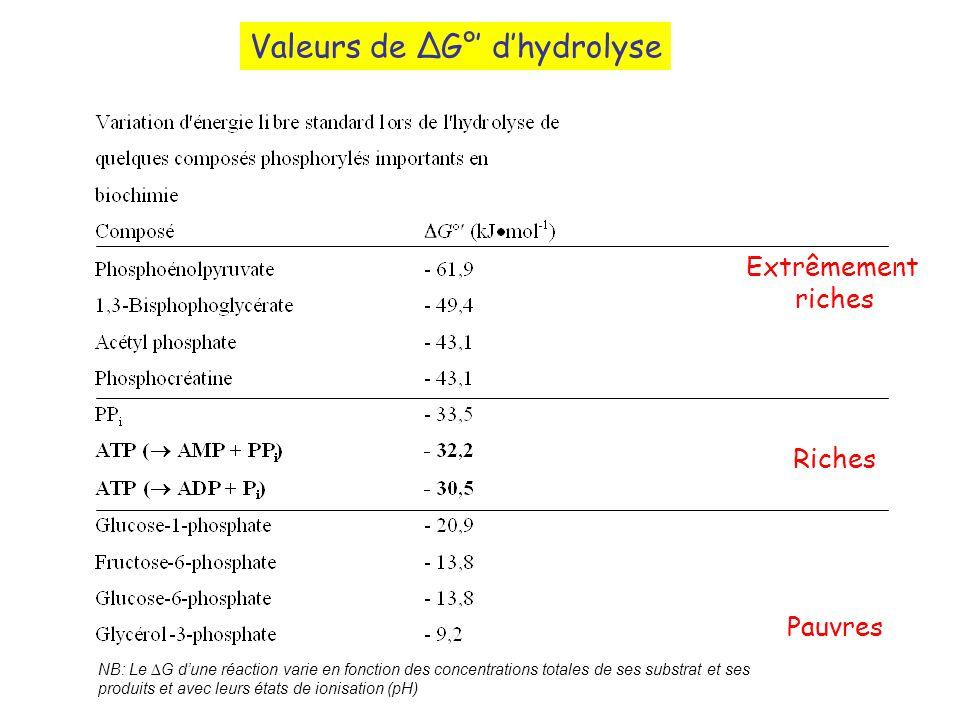 Valeurs de G° dhydrolyse MétaboliteG° hydr kcal/mol Phosphoénolpyruvate- 14,8 1,3-bisphosphoglycérate- 11,8 Acétylphosphate- 11,2 Phosphocréatine- 10,3 Pyrophosphate- 8,0 ATP ( AMP + PPi) - 7,6 ATP (ADP + Pi)- 7,3 Glucose 1-phosphate- 5,0 Glucose-6-phosphate- 3,3 Glycérol-3-phosphate- 2,2 Extrêmement riches Riches Pauvres NB: Le G dune réaction varie en fonction des concentrations totales de ses substrat et ses produits et avec leurs états de ionisation (pH)