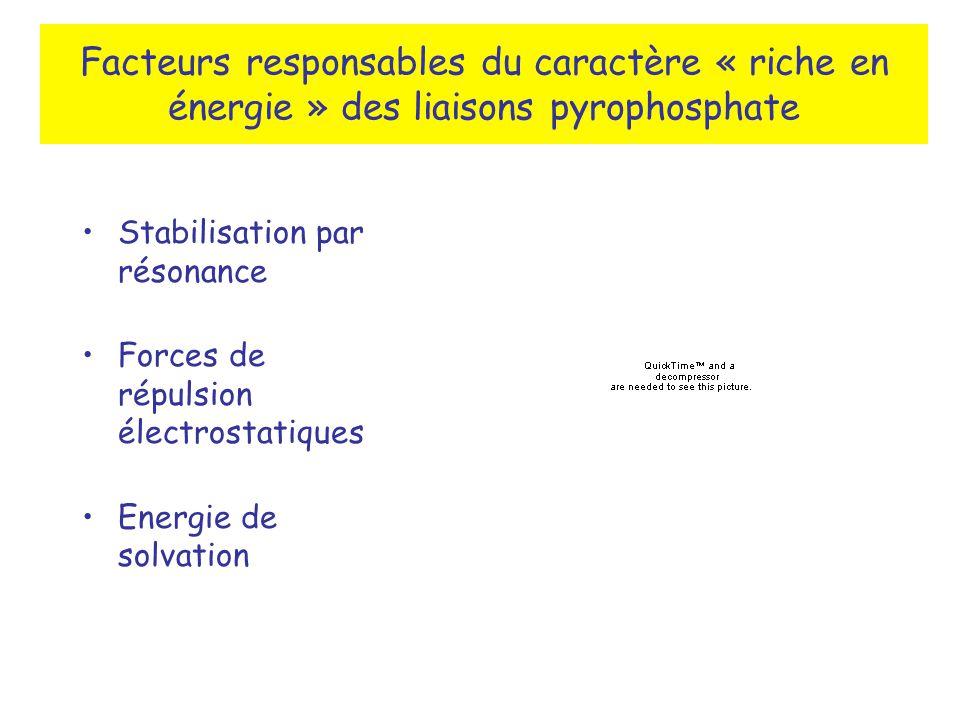 Facteurs responsables du caractère « riche en énergie » des liaisons pyrophosphate Stabilisation par résonance Forces de répulsion électrostatiques Energie de solvation