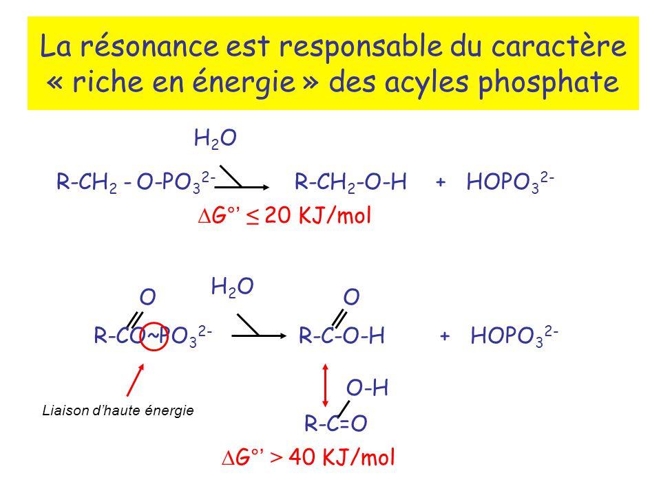 La résonance est responsable du caractère « riche en énergie » des acyles phosphate R-CO~PO 3 2- O R-C-O-H + HOPO 3 2- O H2OH2O R-C=O O-H R-CH 2 - O-PO 3 2- R-CH 2 -O-H + HOPO 3 2- H2OH2O G° 20 KJ/mol G° > 40 KJ/mol Liaison dhaute énergie