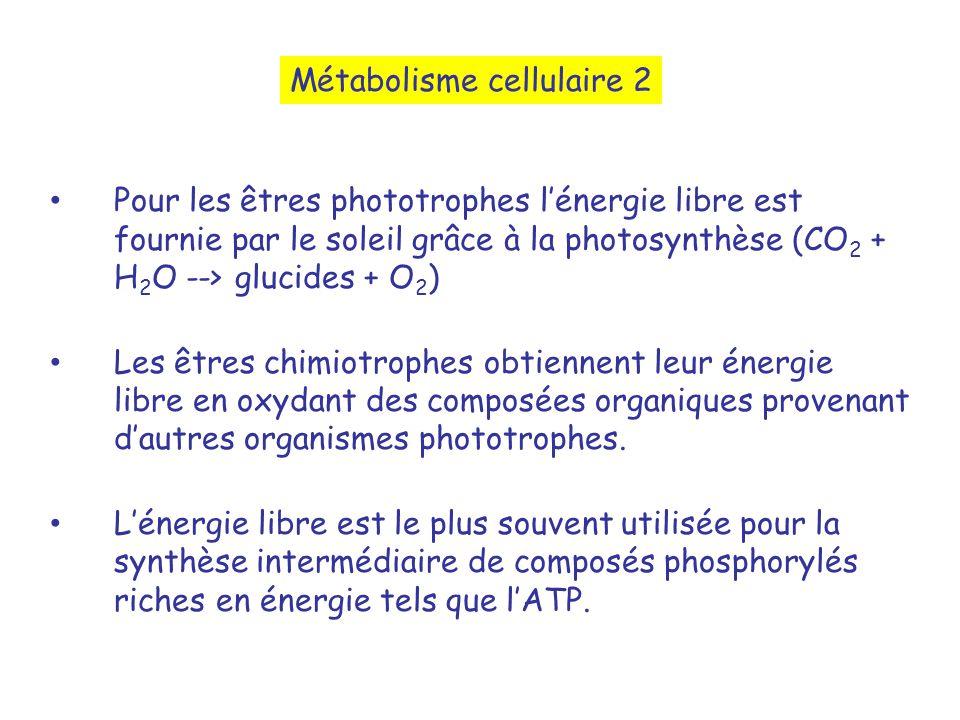 Pour les êtres phototrophes lénergie libre est fournie par le soleil grâce à la photosynthèse (CO 2 + H 2 O --> glucides + O 2 ) Les êtres chimiotrophes obtiennent leur énergie libre en oxydant des composées organiques provenant dautres organismes phototrophes.