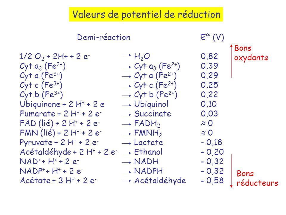 Valeurs de potentiel de réduction Demi-réaction 1/2 O 2 + 2H+ + 2 e - H 2 O Cyt a 3 (Fe 3+ )Cyt a 3 (Fe 2+ ) Cyt a (Fe 3+ ) Cyt a (Fe 2+ ) Cyt c (Fe 3+ ) Cyt c (Fe 2+ ) Cyt b (Fe 3+ ) Cyt b (Fe 2+ ) Ubiquinone + 2 H + + 2 e - Ubiquinol Fumarate + 2 H + + 2 e - Succinate FAD (lié) + 2 H + + 2 e - FADH 2 FMN (lié) + 2 H + + 2 e - FMNH 2 Pyruvate + 2 H + + 2 e - Lactate Acétaldéhyde + 2 H + + 2 e - Ethanol NAD + + H + + 2 e - NADH NADP + + H + + 2 e - NADPH Acétate + 3 H + + 2 e - Acétaldéhyde E° (V) 0,82 0,39 0,29 0,25 0,22 0,10 0,03 0 - 0,18 - 0,20 - 0,32 - 0,58 Bons réducteurs Bons oxydants