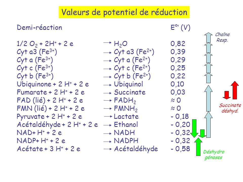 Valeurs de potentiel de réduction Demi-réaction 1/2 O 2 + 2H + + 2 eH 2 O Cyt a3 (Fe 3+ )Cyt a3 (Fe 2+ ) Cyt a (Fe 3+ ) Cyt a (Fe 2+ ) Cyt c (Fe 3+ ) Cyt c (Fe 2+ ) Cyt b (Fe 3+ ) Cyt b (Fe 2+ ) Ubiquinone + 2 H + + 2 eUbiquinol Fumarate + 2 H + + 2 eSuccinate FAD (lié) + 2 H + + 2 eFADH 2 FMN (lié) + 2 H + + 2 eFMNH 2 Pyruvate + 2 H + + 2 eLactate Acétaldéhyde + 2 H + + 2 eEthanol NAD+ H + + 2 eNADH NADP+ H + + 2 eNADPH Acétate + 3 H + + 2 eAcétaldéhyde E° (V) 0,82 0,39 0,29 0,25 0,22 0,10 0,03 0 - 0,18 - 0,20 - 0,32 - 0,58 Succinate déshyd.