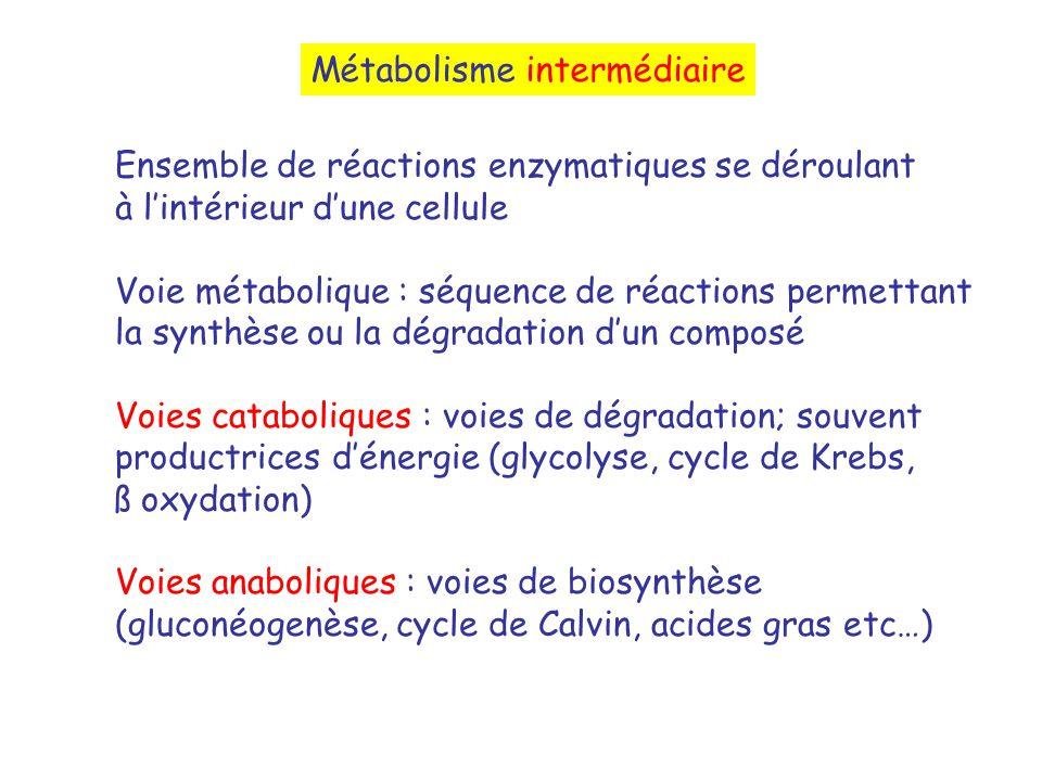 Ensemble de réactions enzymatiques se déroulant à lintérieur dune cellule Voie métabolique : séquence de réactions permettant la synthèse ou la dégradation dun composé Voies cataboliques : voies de dégradation; souvent productrices dénergie (glycolyse, cycle de Krebs, ß oxydation) Voies anaboliques : voies de biosynthèse (gluconéogenèse, cycle de Calvin, acides gras etc…) Métabolisme intermédiaire