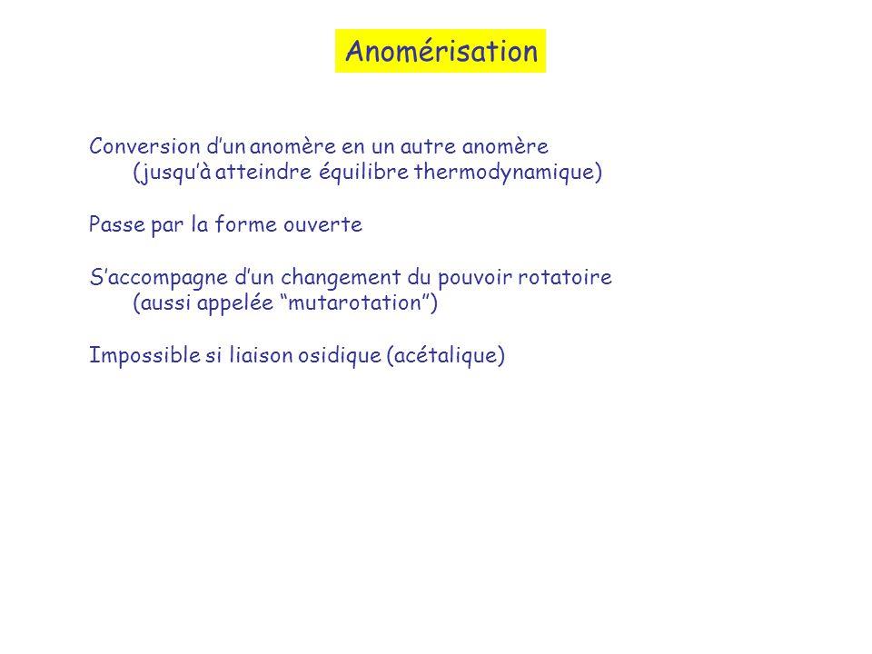 Anomérisation Conversion dun anomère en un autre anomère (jusquà atteindre équilibre thermodynamique) Passe par la forme ouverte Saccompagne dun chang