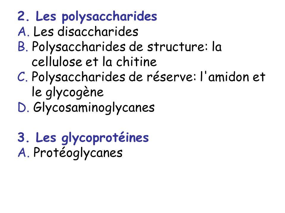 2. Les polysaccharides A. Les disaccharides B. Polysaccharides de structure: la cellulose et la chitine C. Polysaccharides de réserve: l'amidon et le