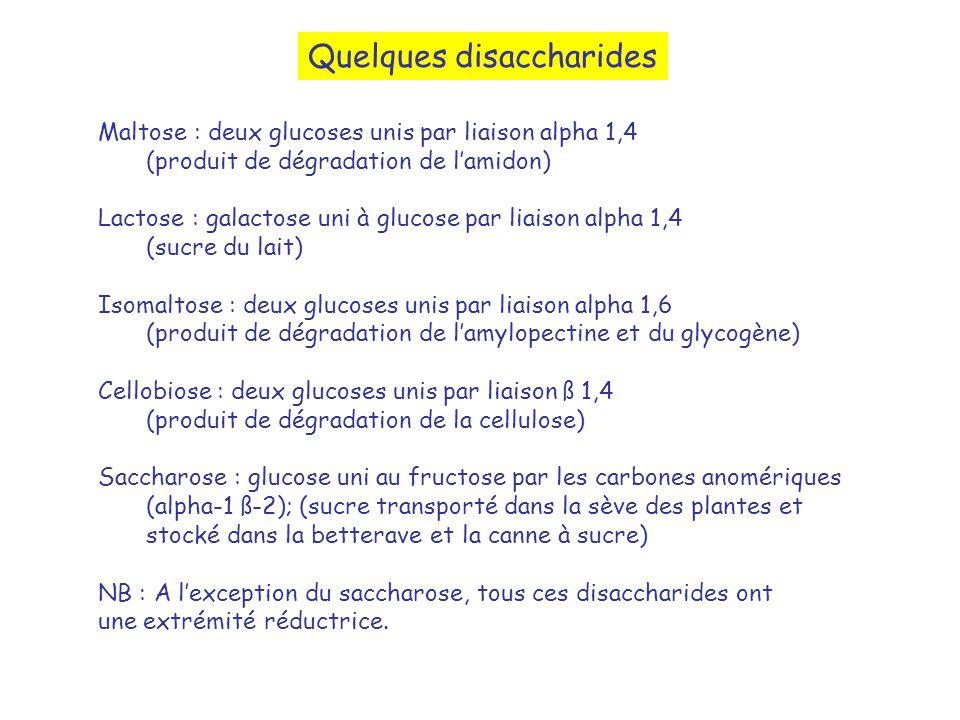 Quelques disaccharides Maltose : deux glucoses unis par liaison alpha 1,4 (produit de dégradation de lamidon) Lactose : galactose uni à glucose par li