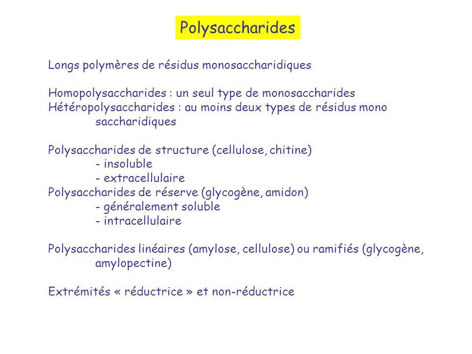 Polysaccharides Longs polymères de résidus monosaccharidiques Homopolysaccharides : un seul type de monosaccharides Hétéropolysaccharides : au moins d