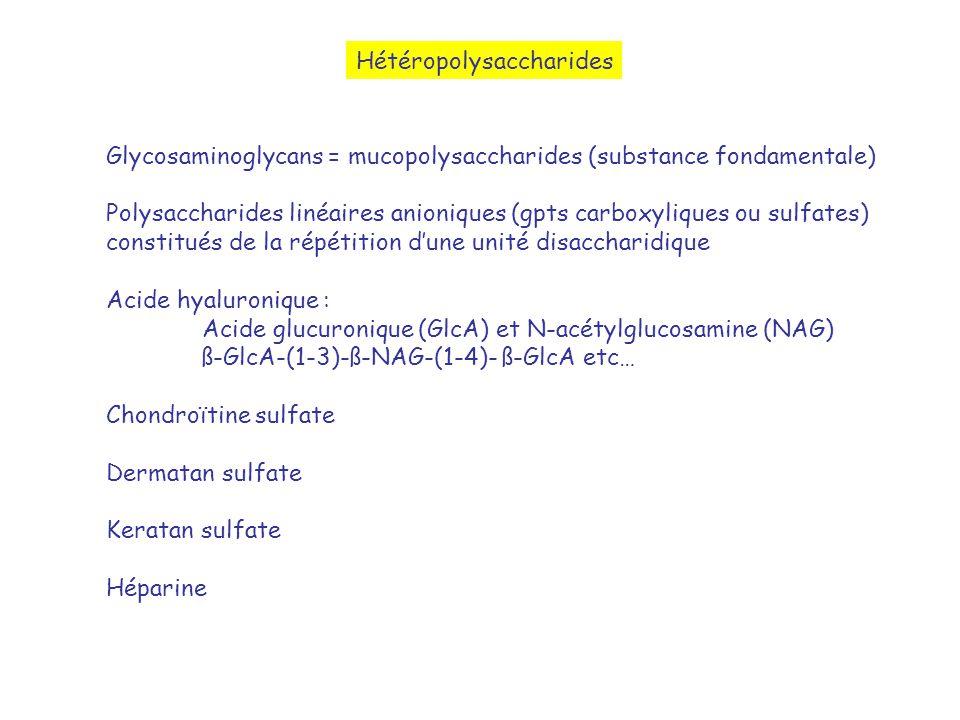Hétéropolysaccharides Glycosaminoglycans = mucopolysaccharides (substance fondamentale) Polysaccharides linéaires anioniques (gpts carboxyliques ou su