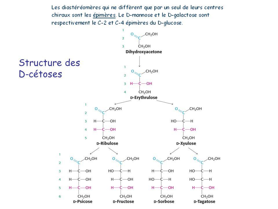 Stéréoisomères Stéréoisomères : isomères différant par la disposition dans lespace des substituants (configuration) autour dau moins un carbone chiral Enantiomères : stéréoisomères qui sont des images en miroir lun de lautre exemple : D-glucose et L-glucose Diastéréoisomères : stéréoisomères non-énantiomériques exemple : D-glucose et L-galactose Epimères : stéréoisomères différant lun de lautre au niveau dun seul carbone chiral exemple : D-glucose et D-galactose, D-glucose et D-mannose Anomères : stéréoisomères différant par la configuration du carbone anomérique