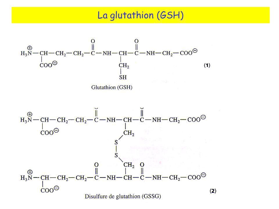La glutathion (GSH)