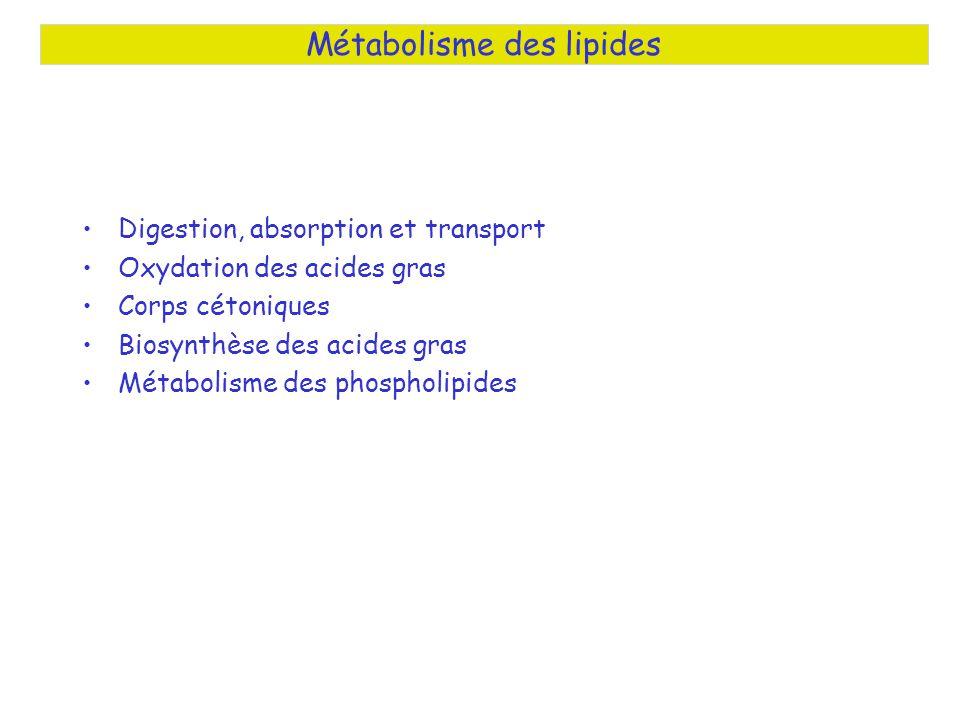 Digestion, absorption et transport Oxydation des acides gras Corps cétoniques Biosynthèse des acides gras Métabolisme des phospholipides Métabolisme des lipides