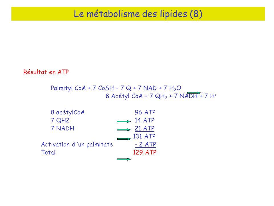 Le métabolisme des lipides (8) Résultat en ATP Palmityl CoA + 7 CoSH + 7 Q + 7 NAD + 7 H 2 O 8 Acétyl CoA + 7 QH 2 + 7 NADH + 7 H + 8 acétylCoA 96 ATP 7 QH2 14 ATP 7 NADH 21 ATP 131 ATP Activation d un palmitate - 2 ATP Total129 ATP