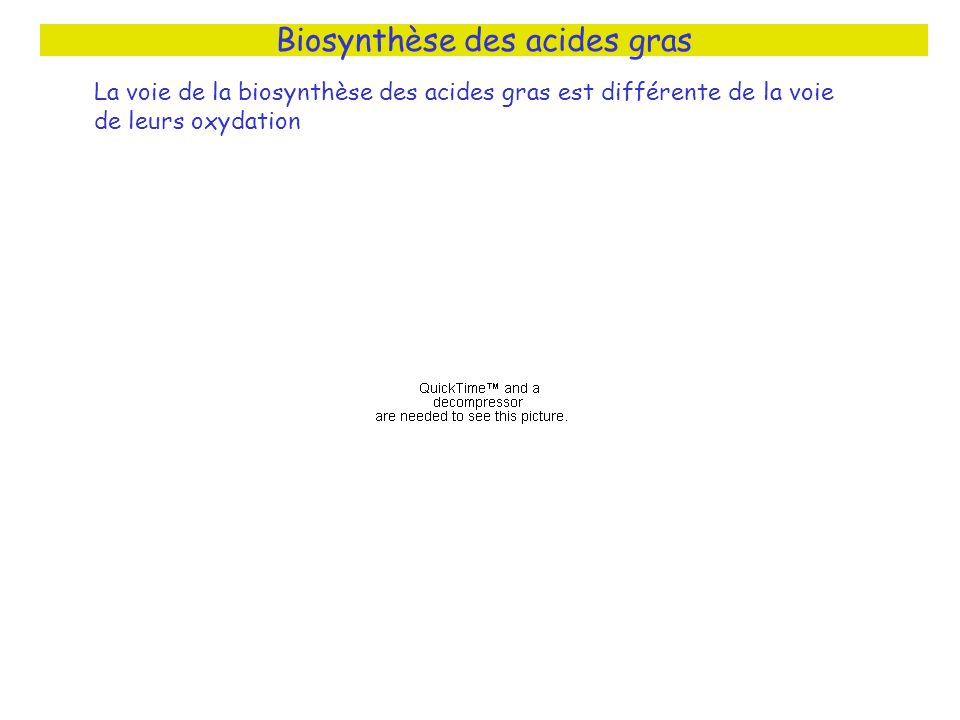 Biosynthèse des acides gras La voie de la biosynthèse des acides gras est différente de la voie de leurs oxydation