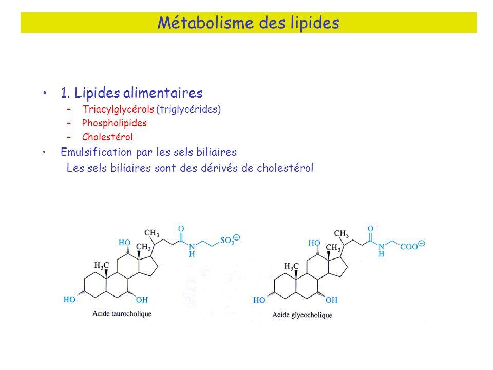1. Lipides alimentaires –Triacylglycérols (triglycérides) –Phospholipides –Cholestérol Emulsification par les sels biliaires Les sels biliaires sont d