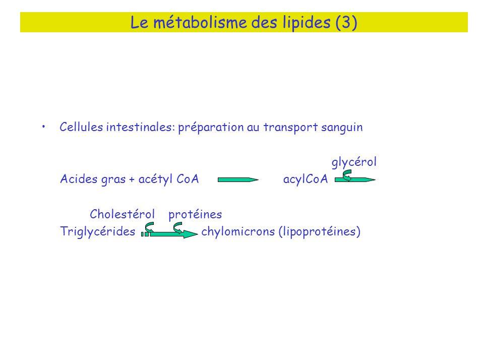 Le métabolisme des lipides (3) Cellules intestinales: préparation au transport sanguin glycérol Acides gras + acétyl CoAacylCoA Cholestérol protéines
