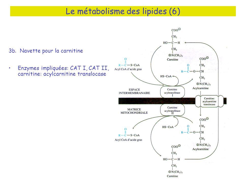 Le métabolisme des lipides (6) 3b.
