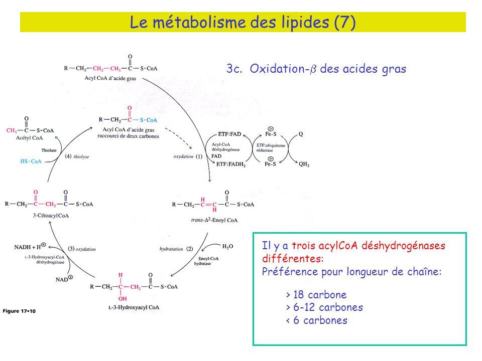 Le métabolisme des lipides (7) 3c.