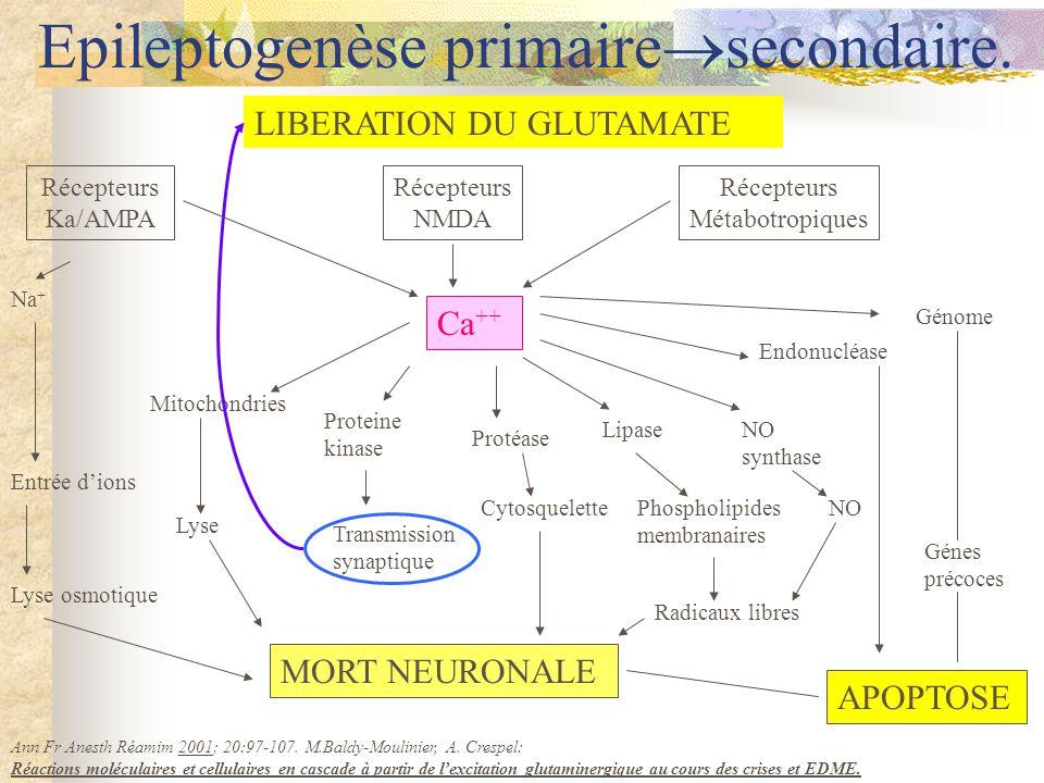 Ca ++ Récepteurs NMDA Récepteurs Métabotropiques Récepteurs Ka/AMPA LIBERATION DU GLUTAMATE Na + Entrée dions Lyse osmotique MORT NEURONALE APOPTOSE Transmission synaptique Lyse Mitochondries Proteine kinase Protéase CytosquelettePhospholipides membranaires Lipase Radicaux libres NO synthase NO Endonucléase Génome Génes précoces Ann Fr Anesth Réamim 2001; 20:97-107.