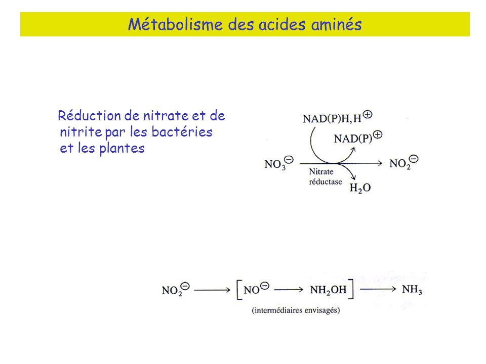 Métabolisme des acides aminés Réduction de nitrate et de nitrite par les bactéries et les plantes