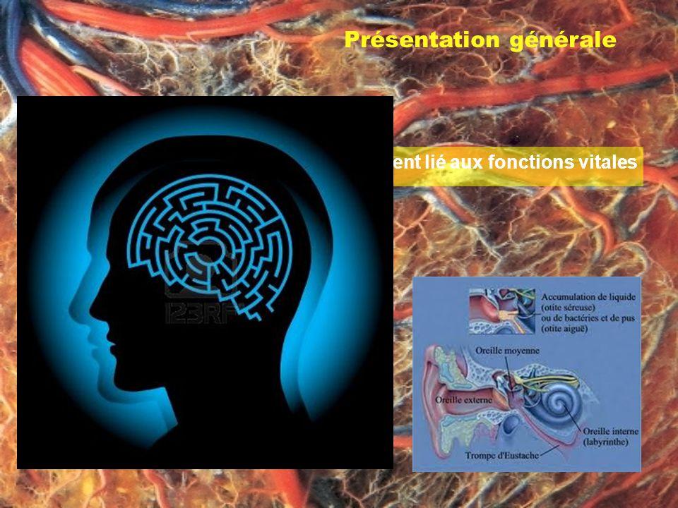 Présentation générale 2. Le labyrinthe est un chemin étroitement lié aux fonctions vitales