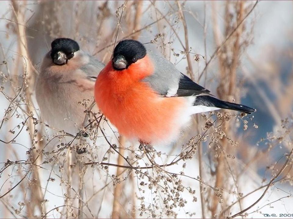 Lautomne sur les ailes des oiseaux couleur de feuille et de forêt qui meurt une tendre rousseur une braise qui savive dans un lambeau de vent arraché à lautomne et les ailes qui volent avec les ailes délivrées.