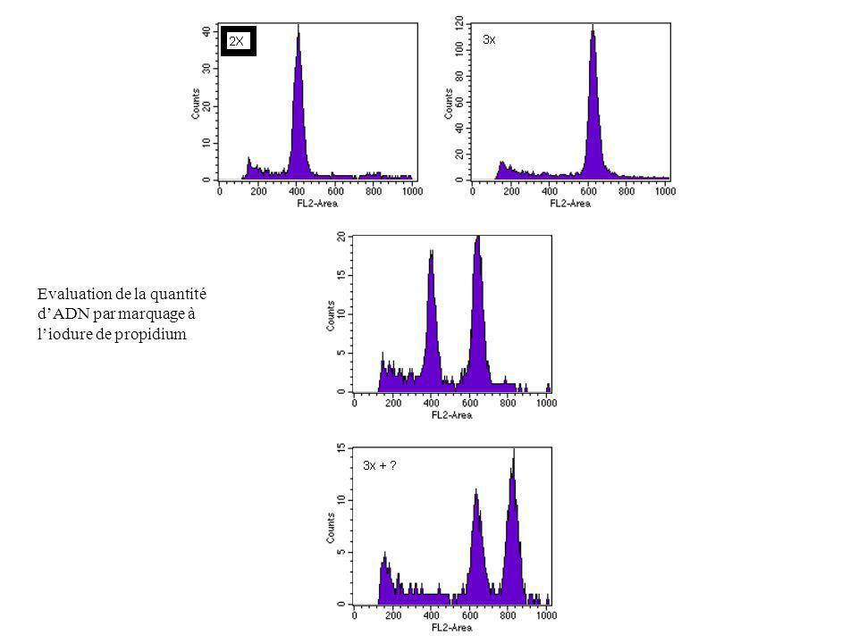 Evaluation de la quantité dADN par marquage à liodure de propidium